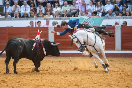 Pozoblanco, Cordoba province, SPAIN- 25 september 2011  Spanish bullfighter on horseback Pablo Hermoso de Mendoza bullfighting on horseback, Bull reaches the horse by nailing the right Horn in rear leg in Pozoblanco, Cordoba province, Andalusia, Spain