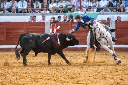 braveness: Pozoblanco, Cordoba province, SPAIN- 25 september 2011  Spanish bullfighter on horseback Pablo Hermoso de Mendoza bullfighting on horseback, Bull reaches the horse by nailing the right Horn in rear leg in Pozoblanco, Cordoba province, Andalusia, Spain