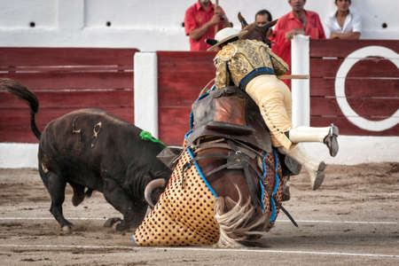 onslaught: Linares, Jaen province, SPAIN - 28 august 2011  Brave bull of black color and 640 Kg knocks down the horse out of the chopper in a tremendous onslaught, the chopper is subject as can be floating in the air during a bullfight held in Linares or also called