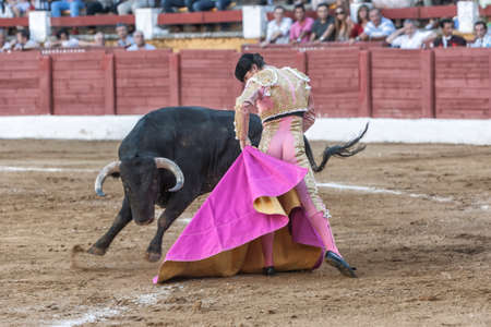 Andujar, Jaen province, SPAIN - 10 september 2011  Spainish bullfighter Daniel Luque bullfighting with a crutch in a beautiful pass by low in the Bullring of Andujar, Jaen province, Andalusia, Spain