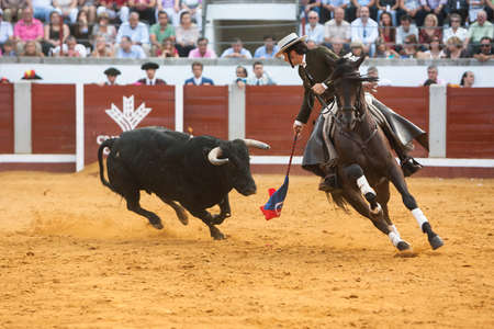 Pozoblanco, Cordoba province, SPAIN- 25 september 2011  Spanish bullfighter on horseback Diego Ventura Riding sideways in a difficult maneuver while the bull pursuing him in Pozoblanco, Cordoba province, Andalusia, Spain