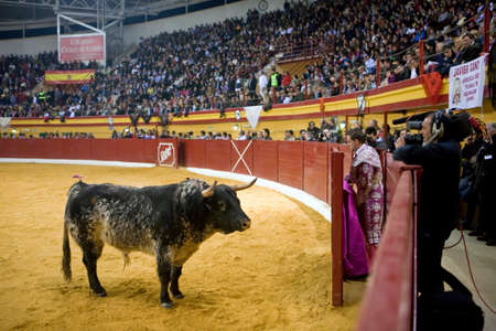 televised: Atarfe, Granada province, SPAIN - 13 march 2011  Brave bull opposite to the refuge in a live televised bullfight in the Atarfe bullring or also called Atarfe coliseum, Atarfe, Granada province, Andalusia, Spain Editorial