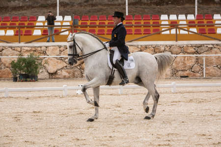 pure breed: Valdepe�as de Jaen, Jaen province, SPAIN - 10 october 2008  Spanish purebred horse competing in dressage competition classic in La Beata, mounted by Spanish Olympic champion Jose manuel Munoz, Valdepe�as de jaen, Jaen province, Andalusia, Spain