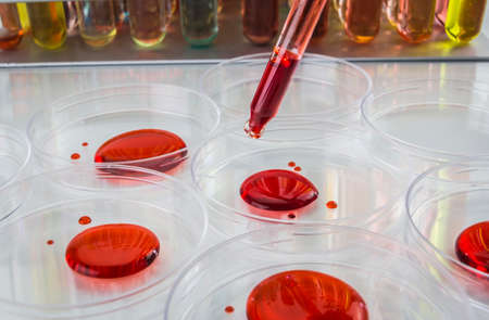 emerging: Laboratory plastic pipette filled with red liquid and emerging drop of chemical solution over Petri dishes for a biology experiment in a science research lab