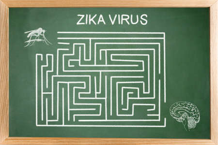 resolved: Conceptual diagram drawn with chalk on a Blackboard green of the Of Zica virus (ZIKV), Labyrinth without resolved