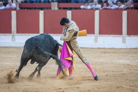 bullfighting: Ubeda, Spain - October 1, 2011: The Spanish Bullfighter El Cid bullfighting with the crutch in the Bullring of Ubeda, Spain Editorial