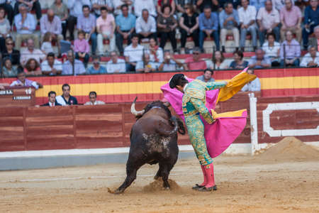 Jaen, Spain - October 15, 2011: Alberto Lamelas fighting with the cape a brave bull in the bullring of Jaen, Spain