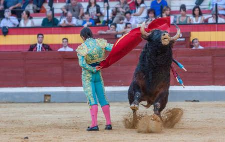 corrida de toros: Jaen, Espa�a - 15 de octubre de 2011: Alberto Lamelas luchando con el capote de un toro bravo en la plaza de toros de Ja�n, Espa�a