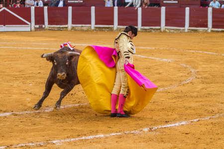 bullfighting: Andujar, Spain - September 4, 2010: The Spanish Bullfighter El Fandi bullfighting with the crutch in the Bullring of Ubeda, Spain