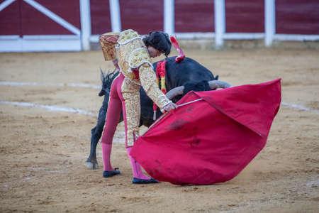 bullfighting: Andujar, Spain - September 29, 2010: The Spanish Bullfighter Curro Diaz bullfighting with the crutch in the Bullring of Ubeda, Spain