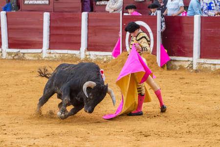 Andujar, Spain - September 4, 2010: The Spanish Bullfighter Daniel Luque bullfighting with the crutch in the Bullring of Ubeda, Spain