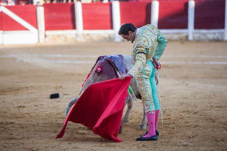 bullfighting: Ubeda, Spain - September 29, 2010: The Spanish Bullfighter El Cid bullfighting with the crutch in the Bullring of Ubeda, Spain