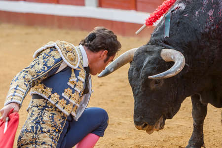 david fandila: Pozoblanco, Spain - September 23, 2011: The Spanish Bullfighter David Fandila El Fandi bullfighting with the crutch, a few inches of the bulls head in the Bullring of Pozoblanco, Spain