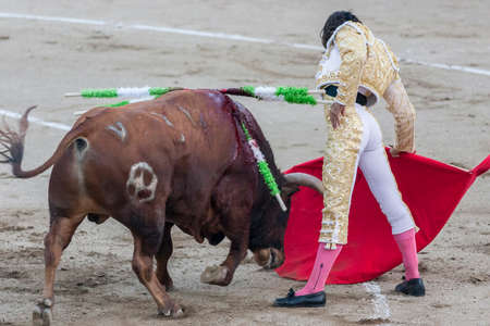 bullfighting: Linares, SPAIN - August 29 2014: The Spanish Bullfighter Curro Diaz bullfighting with the crutch in the Bullring of Linares, Spain