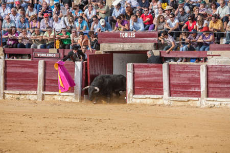 going out: Ubeda, Spain - October 2, 2010: Capture of the figure of a brave bull in a bullfight going out of bullpens, Ubeda, Spain Editorial