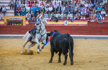 capote: Jaen, SPAIN- October 13, 2008: Spanish bullfighter on horseback Diego Ventura bullfighting on horseback in the bullring of Jaen, Spain Editorial