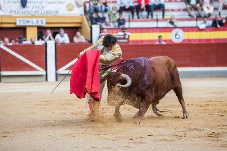 bullfighting: Jaen, SPAIN - October 17, 2008:  The Spanish Bullfighter Curro Diaz bullfighting with the crutch in the Bullring of Jaen, Spain Editorial