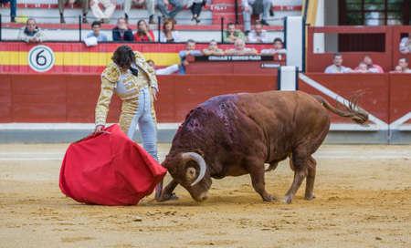 corrida de toros: Jaen, ESPAÑA - 17 octubre de 2008: El español torero Curro Díaz toreando con la muleta en la plaza de toros de Jaén, España Editorial