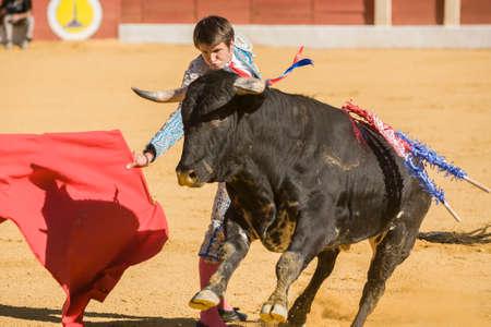 corrida de toros: Baeza, ESPAÑA, 27 de Junio ??de 2009: El Torero español toreando con la muleta en la plaza de toros de Baeza, España