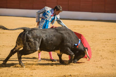 bullfighting: Baeza, SPAIN, June 27, 2009: The Spanish Bullfighter bullfighting with the crutch in the Bullring of Baeza, Spain Editorial