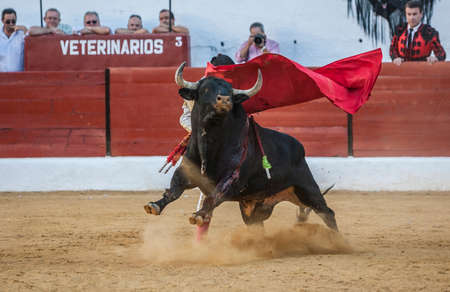 Sabiote, SPAIN, September 9, 2011: The Spanish Bullfighter Jose Carlos Venegas bullfighting with the crutch in the Bullring of Sabiote, Spain 新聞圖片