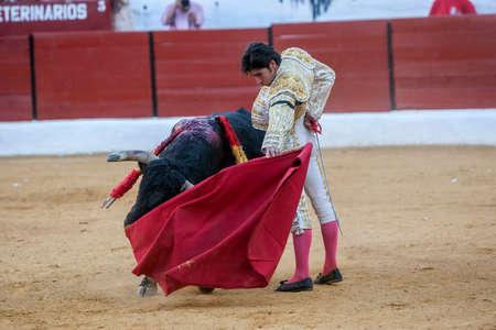 bullfighting: Sabiote, SPAIN, September 9, 2011: The Spanish Bullfighter Cayetano Rivera bullfighting with the crutch in the Bullring of Sabiote, Spain