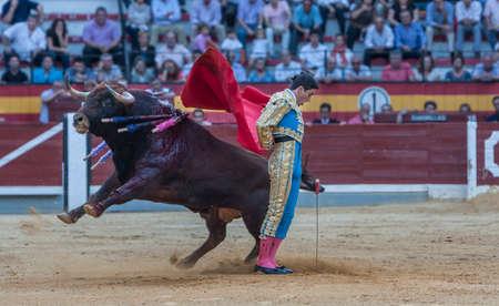 corrida de toros: Jaen, ESPAÑA - 15 de octubre de 2011: El español Torero José Carlos Venegas toreando con la muleta en la plaza de toros de Jaén, España