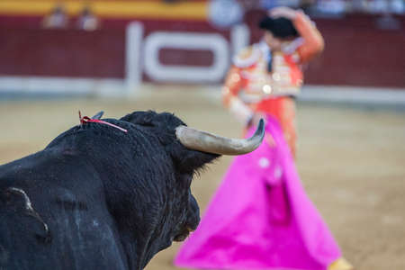 bullfighter: Bullfighter with the capote or cape, Spain Editorial