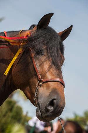 yegua: Detalle de la cabeza de un caballo de pura raza española Foto de archivo