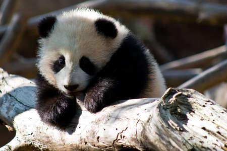 teething: teething panda