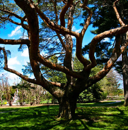 Twisting tree branches