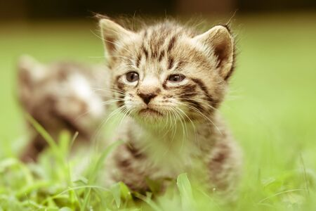 Adorable little kittens a great pet to adopt and own photo