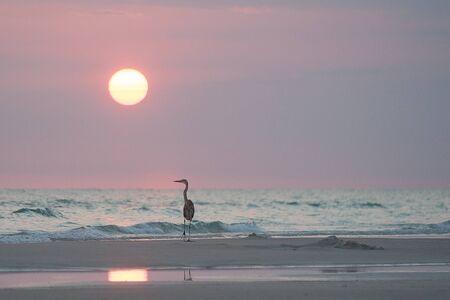 panama city beach: airone di relax al tramonto