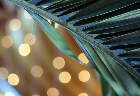 fronds:  christmas palm tree