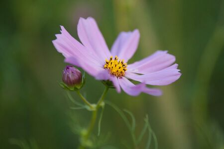 spring meadow flowers Stock Photo - 16347403