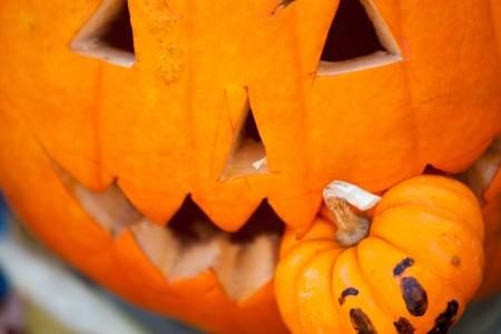 indulgence: pumpkin eating pumpkin