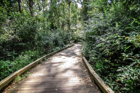 wood path in forest