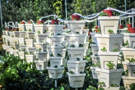 vertikalen Strawberry Garden