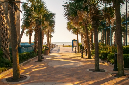 palm tree alley at myrtle beach