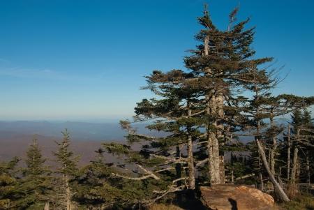 ont van Mount Mitchell, het hoogste punt in de oostelijke Verenigde Staten