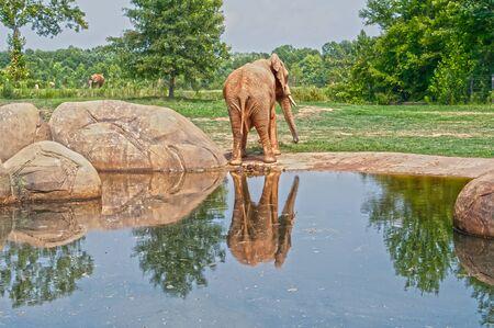 reflection: elephant reflection Stock Photo