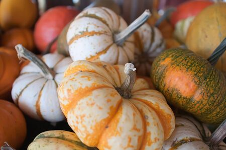 Pumpkins in pumpkin patch waiting to be sold Stock Photo - 17095332