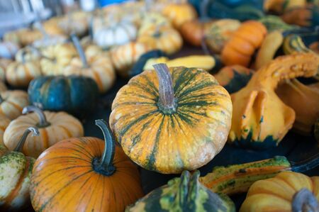 Pumpkins in pumpkin patch waiting to be sold Stock Photo - 17096723