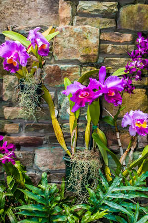 purple orchids with cultured stone background Stok Fotoğraf