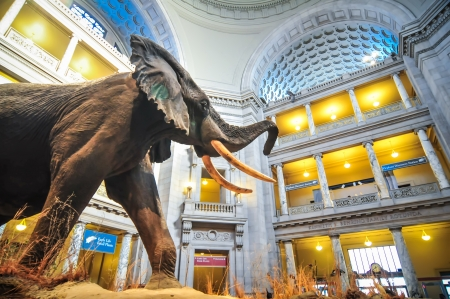 Interior view of rotunda of Natural History Museum in Washington, DC. EDITORIAL USE ONLY. Editorial