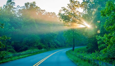 Road through forest with light beams and sun rays through green trees Imagens