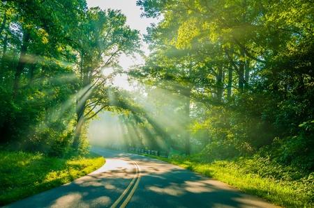 Stra�e durch Wald mit Lichtstrahlen und Sonnenstrahlen durch gr�ne B�ume
