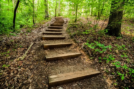 underbrush: things you find on a hiking trail in state park