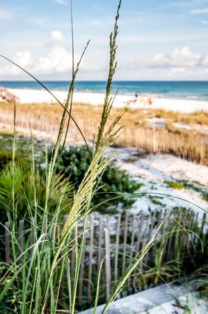 destin: desting florida ocean environment on gulf of mexico Stock Photo