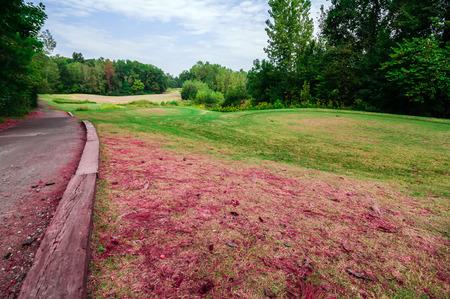 17th: 17th annual flamingo open golf tournament Stock Photo